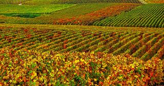 Autorisation de plantation des vignes : ce qui va changer