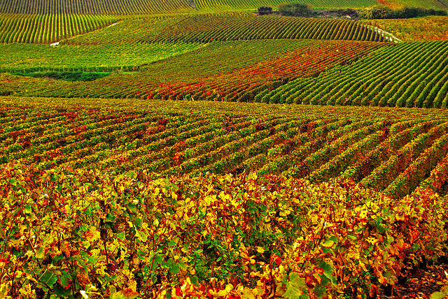 Vincent Brassinne-The Vineyards (CC BY-NC-ND 2.0)