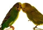 Saint Valentin : le succès des sites de rencontres