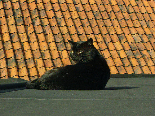 Peter Huys-Black cat(CC BY-SA 2.0)