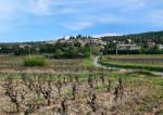 Vin : le réenchantement du Languedoc
