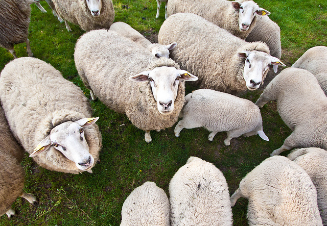 Le contribuable, mouton tondu au profit d'EDF ?