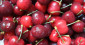 Préparez-vous à ne pas manger de cerises cet été