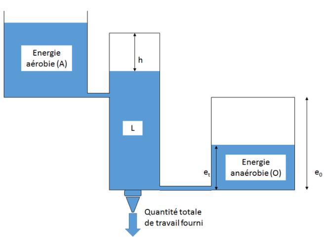 Analogie entre les réservoirs hydrauliques et l'énergie du corps humain. Polytechnique, Author provided