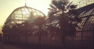 Lever de soleil à travers les vitres des serres d'Auteuil