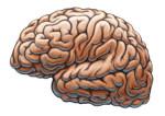 Quelle place pour les mathématiques dans le cerveau ?