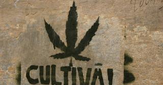 Une marche pour la légalisation du cannabis