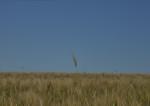 OGM : la mauvaise foi des écolos