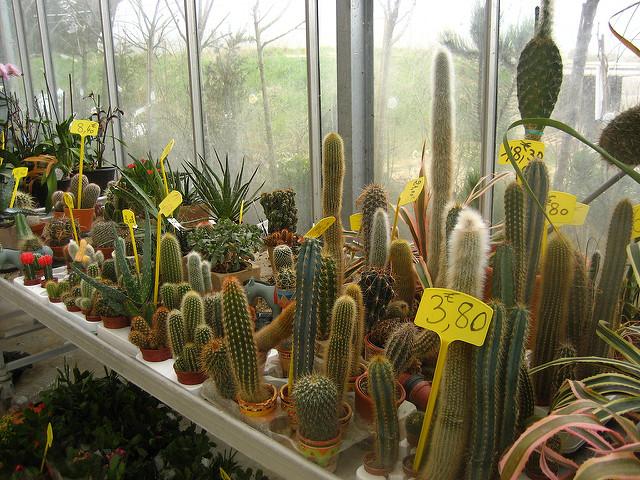 Cactus de la jardinerie by Sunny Ripert (CC BY-SA 2.0)