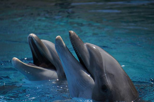Privatisons les océans !