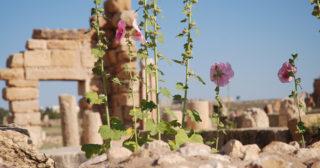 Libéraliser la Tunisie : une chance pour l'Europe