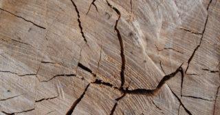 Pourquoi il ne faut pas subventionner le bois canadien