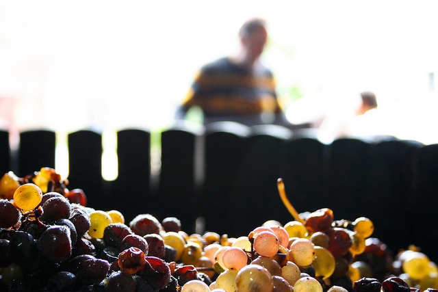 Les 8 mesures récoltées par les entrepreneurs à l'automne