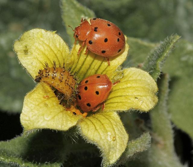 Que peut apporter le biomimétisme à l'entreprise ?